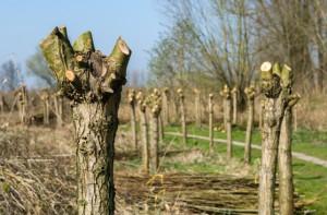 Bomen knotten Persregio Dender