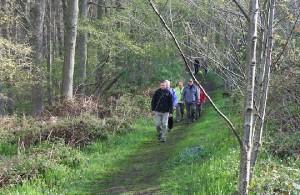 Wandelen door bos Persregio Dender