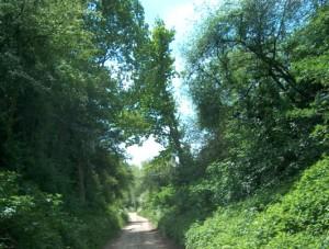 Ninove Diepe straten wandelroute Persregio Dender