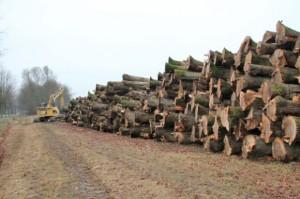 Bomen rooien voor aanleg bedrijventerrein Persregio Dender