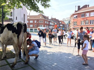 LokaalMarkt Aalst zet koe op Werfplein Persregio Dender