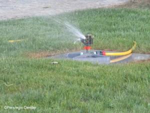 Gras sproeier 1 Persregio Dender